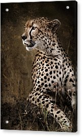 Chill Cheetah Acrylic Print