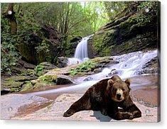 Chillin Bear Acrylic Print by Bob Jackson