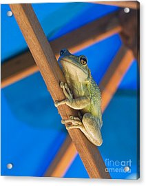 Chillin By The Pool Acrylic Print by Michelle Wiarda