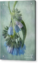 Chiming Bells Part I Acrylic Print by Priska Wettstein