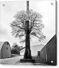 Chimney Tree Acrylic Print
