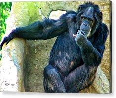 Acrylic Print featuring the photograph Chimp 1 by Dawn Eshelman