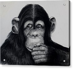Chimp Acrylic Print by Jean Cormier