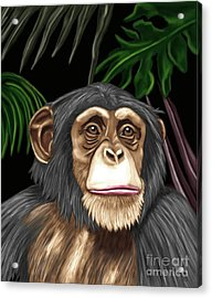 Chimp Acrylic Print by Karen Sheltrown