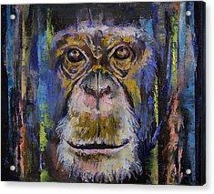 Chimpanzee Acrylic Print