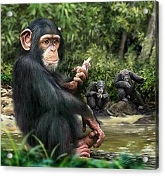 Chimpanzee Acrylic Print by Owen Bell