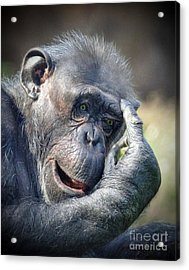 Acrylic Print featuring the photograph Chimpanzee Thinking by Savannah Gibbs