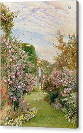 China Roses Acrylic Print by Alfred Parsons