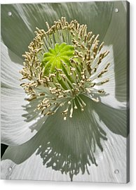 Acrylic Print featuring the photograph China White by David Stine