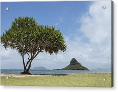 Chinamans Hat With Tree - Oahu Hawaii Acrylic Print by Brian Harig