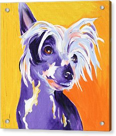 Chinese Crested - Spike Acrylic Print
