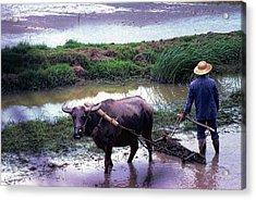 Chinese Farmer 1981 Acrylic Print