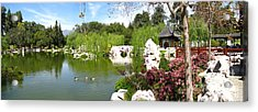 Chinese Gardens Acrylic Print by Bedros Awak