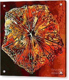 Chinese Lantern Acrylic Print by Dragica  Micki Fortuna