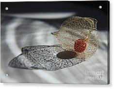 Chinese Lantern Plant - B Acrylic Print