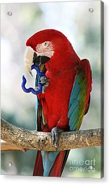 Acrylic Print featuring the photograph Chip by Judy Whitton