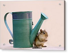 Chipmunk And Watering Can Acrylic Print by Peggy Collins