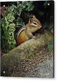 Chipmunk Acrylic Print by Ken Everett