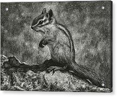 Chipmunk On The Rocks Acrylic Print by Sandra LaFaut