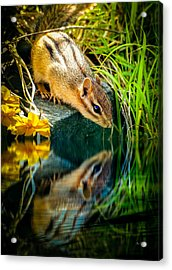 Chipmunk Reflection Acrylic Print by Bob Orsillo