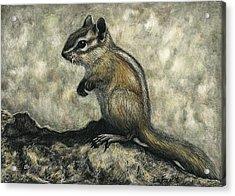 Chipmunk  Acrylic Print by Sandra LaFaut
