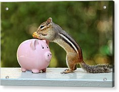 Chipmunk Saving Peanut For A Rainy Day Acrylic Print