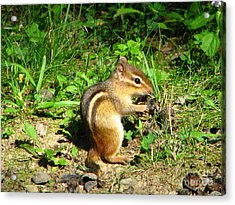 Chippy Acrylic Print by Michael Krek