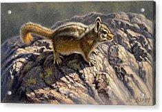 Chippy On The Rocks Acrylic Print by Paul Krapf