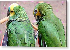 Chit And Chat 2 Acrylic Print by Van Ness
