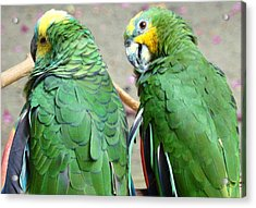 Chit And Chat Acrylic Print by Van Ness