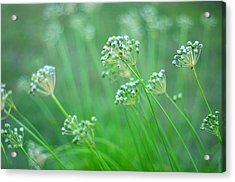 Acrylic Print featuring the photograph Chive Garden by Suzanne Powers