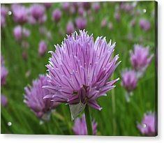Acrylic Print featuring the photograph Chive by Gene Cyr