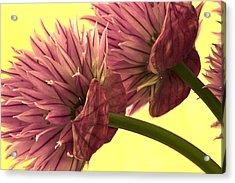 Chive Macro Beauty Acrylic Print