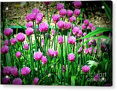 Chives Acrylic Print by Christy Beal