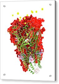 Chloride Channel And Ivermectin Complex Acrylic Print by Ramon Andrade 3dciencia