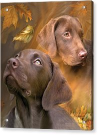 Chocolate Lab Acrylic Print