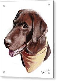 Chocolate Lab Acrylic Print by Eric Smith