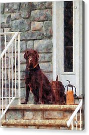 Chocolate Labrador On Porch Acrylic Print by Susan Savad