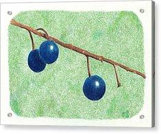 Choke Cherry Acrylic Print by Sheila Byers