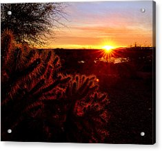 Cholla On Fire Acrylic Print