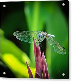 Acrylic Print featuring the photograph Chomped Wing Squared by TK Goforth