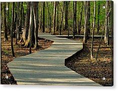 Choose Your Path Acrylic Print