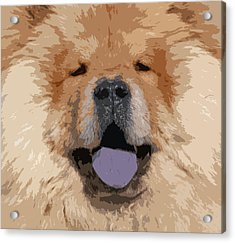 Chow Chow Acrylic Print by Nancy Merkle
