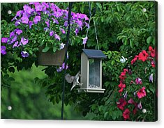 Acrylic Print featuring the photograph Chow Time For This Bird by Thomas Woolworth