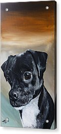 Chowder The Pug Rat Terrier Mix Acrylic Print by Michelle Iglesias