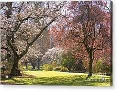 Christchurch Blossom In Hagley Park Acrylic Print by Colin and Linda McKie