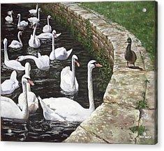 christchurch harbour swans with Mallard Duck conversation Acrylic Print by Martin Davey