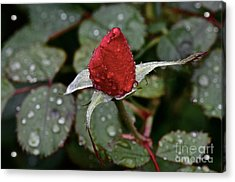 Christmas Bud Acrylic Print by Dan Hefle