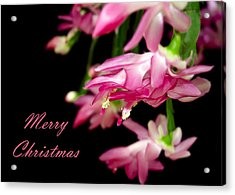 Christmas Cactus Greeting Card Acrylic Print by Carolyn Marshall
