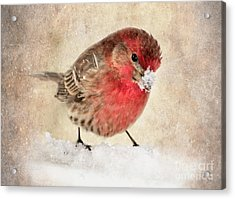 Christmas Card 9 Acrylic Print by Betty LaRue